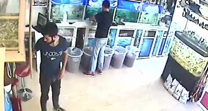 Petshoptan hırsızlık güvenlik kamerasında