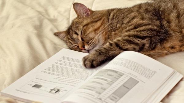 Peki Biz Kediden Neler Öğrenmeliyiz?