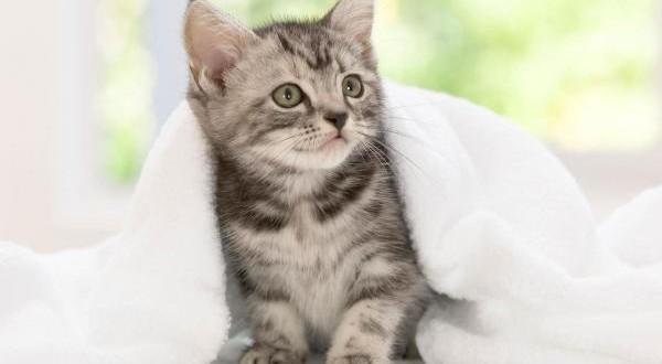 Annesiz Yavru Kediye Nasıl Bakılır?