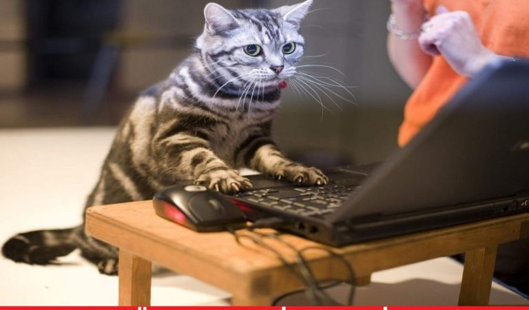 Sosyal Kedi Capsleri