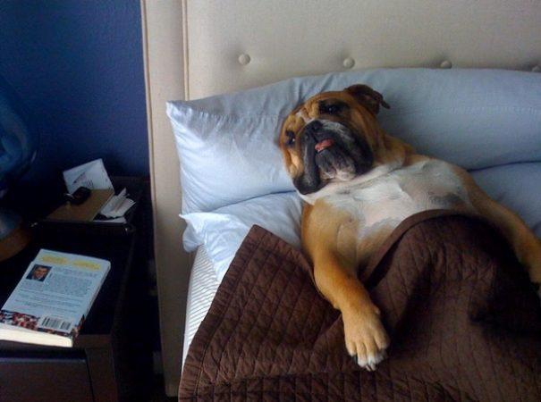 Evcil Hayvanlar Rüya Görürmü?