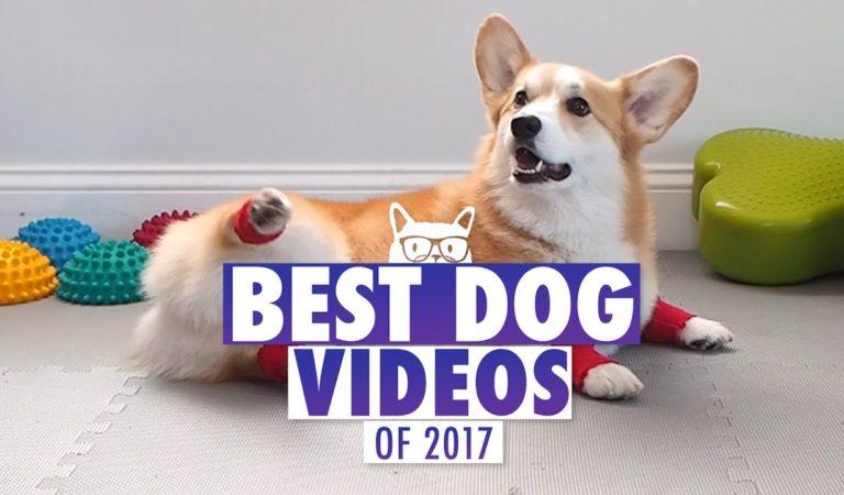 En İyi Köpek Videoları