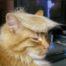 Bartek kullanıcısının profil fotoğrafı